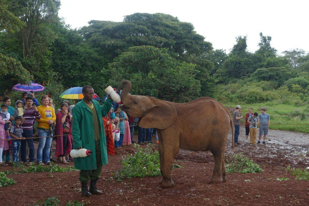 Elephant Feeding at the DSWT